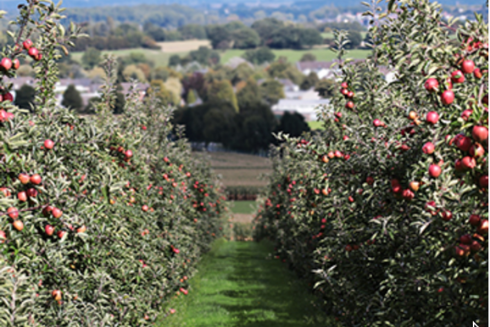 400 fruit trees planted on 1.25 acres for new semi-commercial heritage orchard project within the Harrogate District